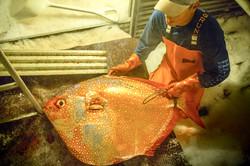 Fresh Hawaiian Opah Moonfish