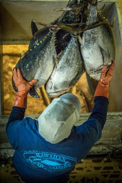 Fresh Hawaiian Bigeye Tuna Offloaded