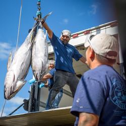 Hawaii Longline Tuna Pier 38