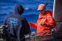 Hawaii Longline Fishing For Tuna