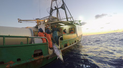 Ocean To Table Hawaiian Tuna