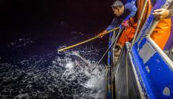 Hawaii Longline Tuna Fishing