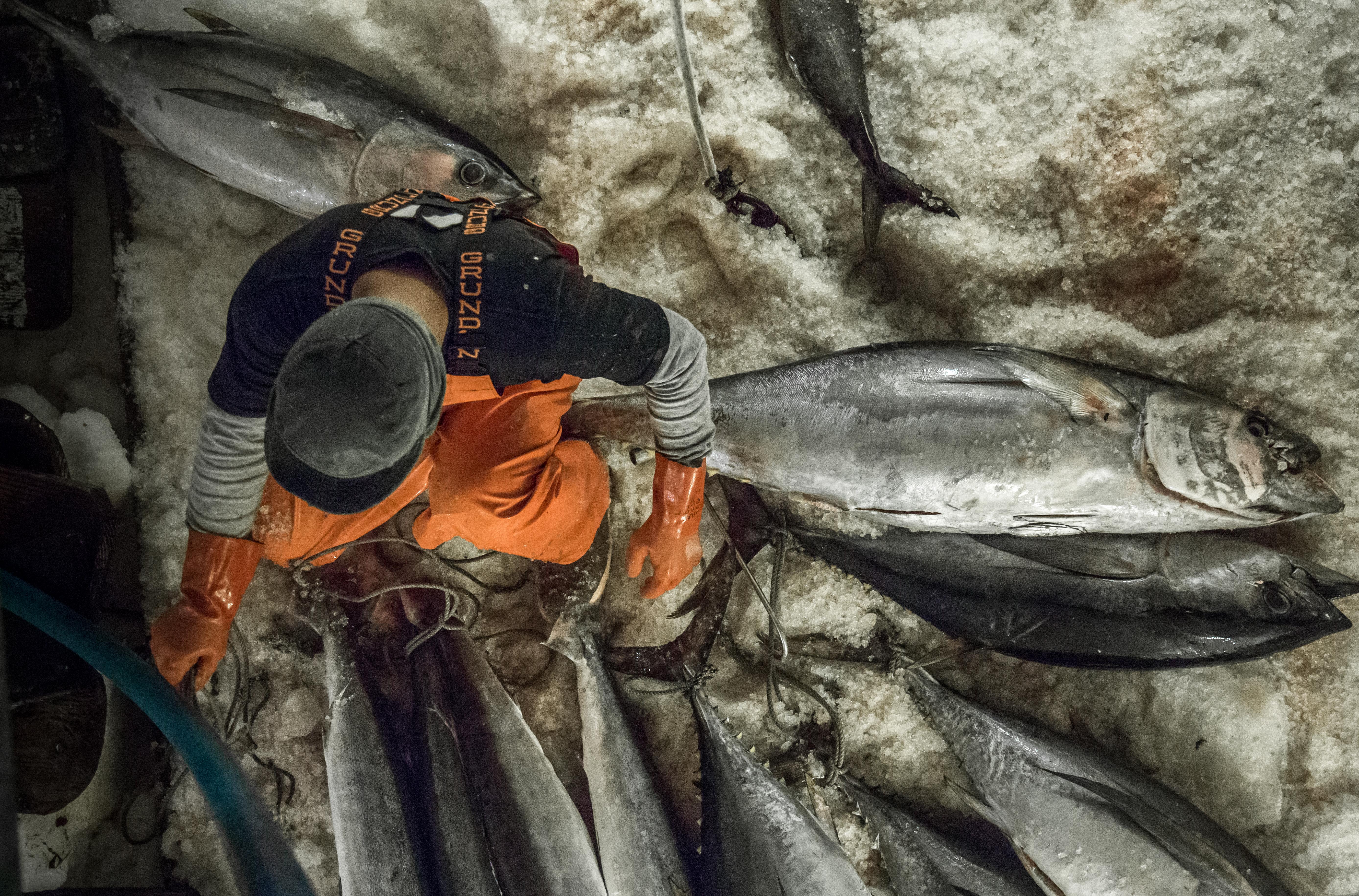 Buy Hawaiian Yellowfin ahi tuna