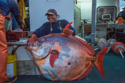 Opah aka Moonfish