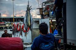 wholesale hawaiian seafood offloaded