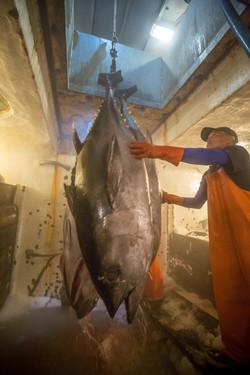 Premium Quality Hawaiian Tuna