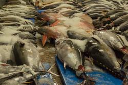 Fresh Hawaiian Seafood