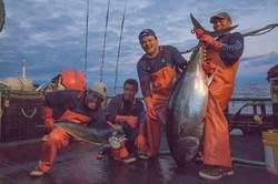 Fresh Bigeye Hawaiian Tuna Ahi