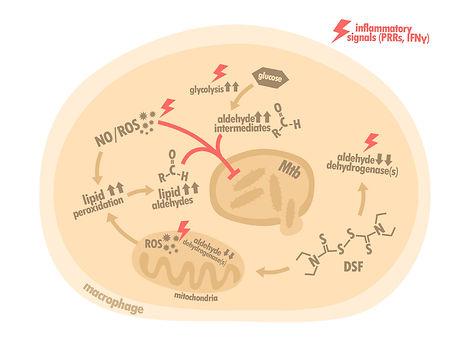 Aldehyde for web.jpg