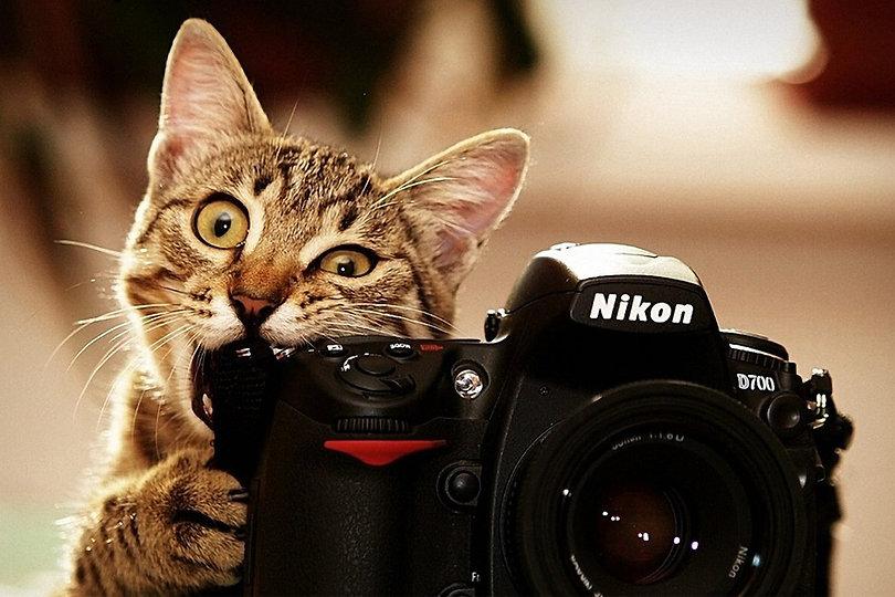 pisica-fotograf-900x600.jpg