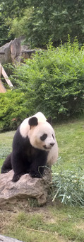 La Baguenaude au zoo de Beauval 08.07.2021