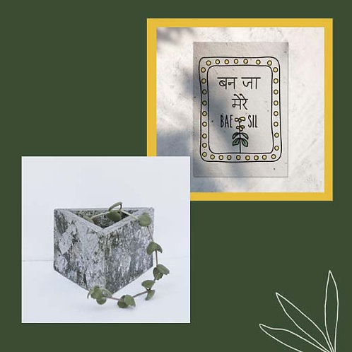 JEWEL PLANTER + PLANTABLE GREETING
