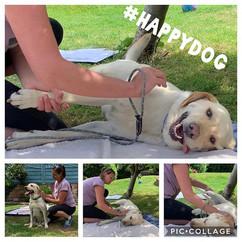 Canine Merishia Massage - I had the plea