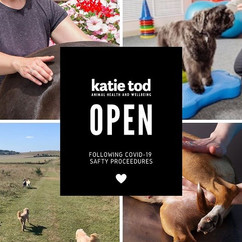 Excited to be open again for canine rest