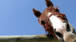 horse image.png