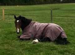 Horse Care.jpeg