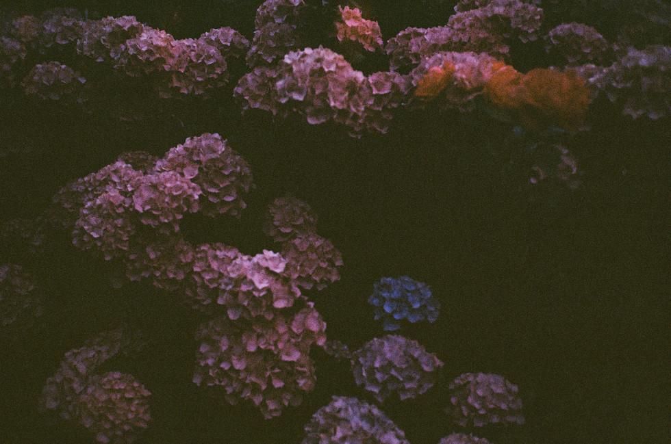 Film1744_15.jpg