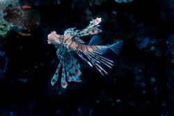 dhfotografie-Daniel Haessig-Unterwasser-2