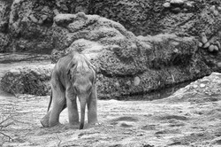 dhfotografie-Daniel Haessig-Elefantenbaby-3