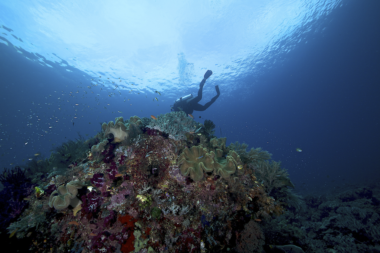 dhfotografie-Daniel Haessig-Unterwasser-28