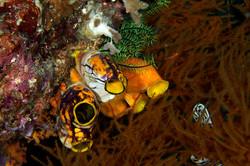 dhfotografie-Daniel Haessig-Unterwasser-6