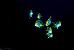 dhfotografie-Daniel Haessig-Unterwasser-9-2
