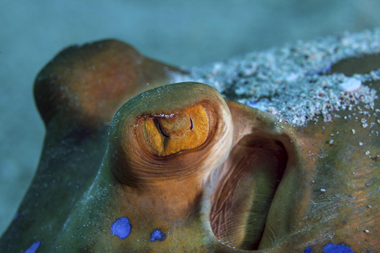 dhfotografie-Daniel Haessig-Unterwasser-15-2