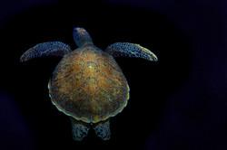 dhfotografie-Daniel Haessig-Unterwasser-6-2
