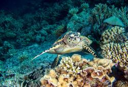 dhfotografie-DanielHaessig-Unterwasser-Schildkröte
