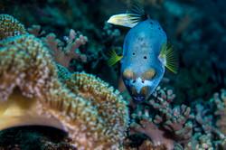 dhfotografie-Daniel Haessig-Unterwasser-18