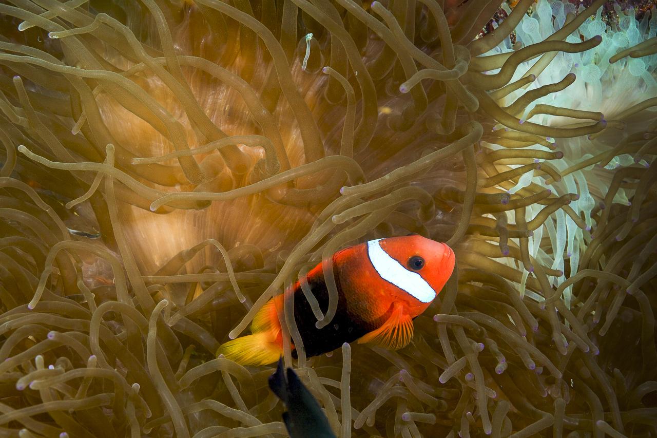 dhfotografie-Daniel Haessig-Unterwasser-9