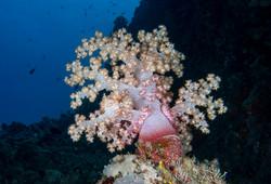 dhfotografie-Daniel Haessig-Unterwasser-20-3