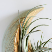 Wall sculpture airplant holder