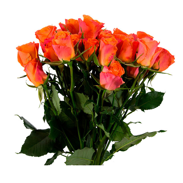 Spray Rose Orange Star Premium