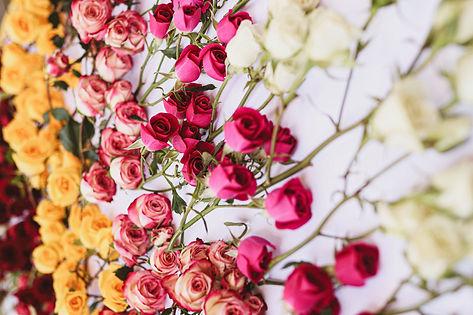 Spray+Roses
