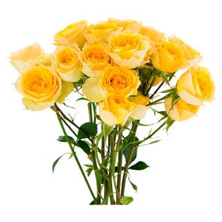 Spray Rose Good Yellow Standard