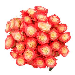 Spray Rose Red Illusion
