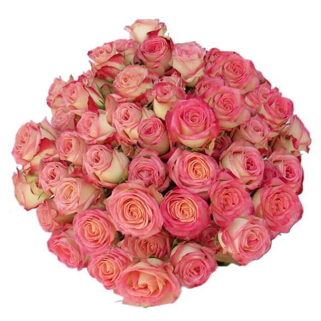 Spray Rose Safina