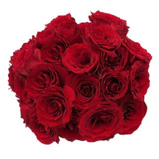 Spray Rose Red Vision