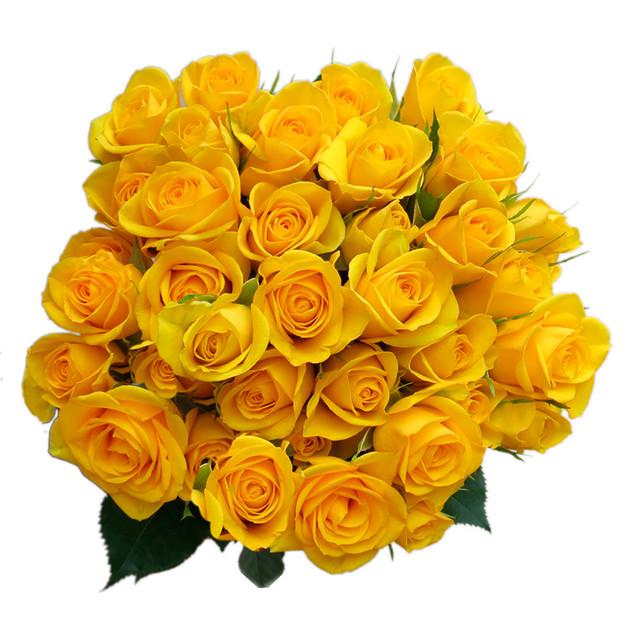 Spray Rose Suntan