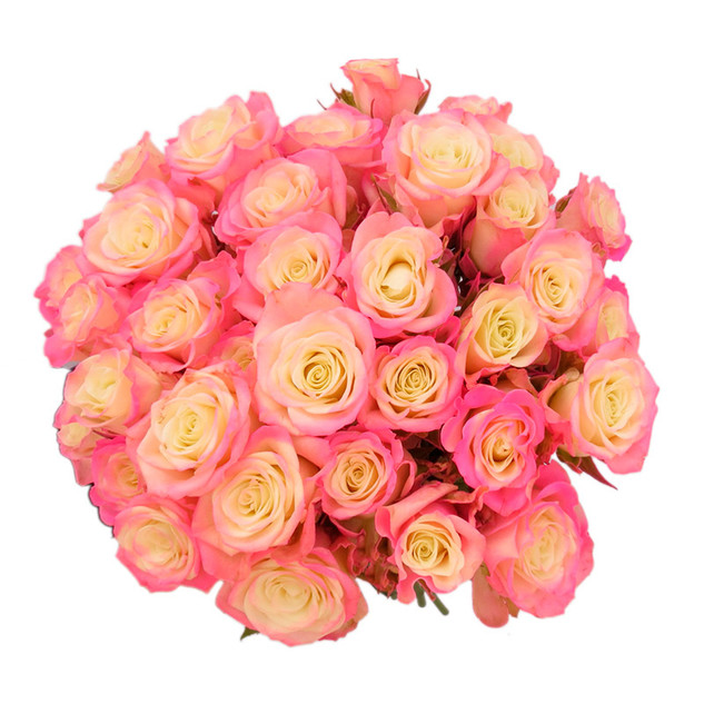 Spray Rose Pink Illusion