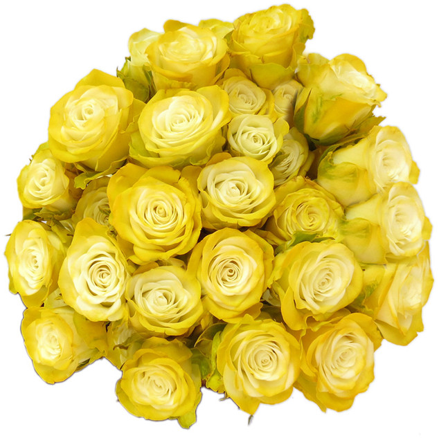 Spray Rose Yellow Illusion