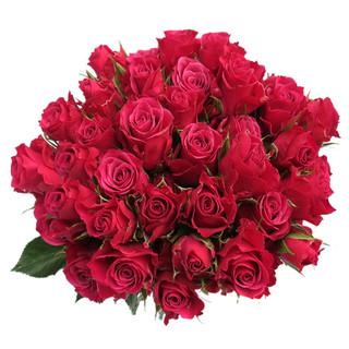 Spray Rose Glorious