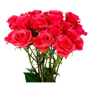 Spray Rose Bellina Premium