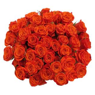 Spray Rose Neo