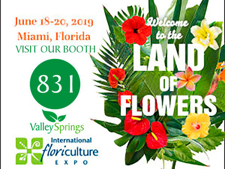 Valley Spring in International Floriculture Expo