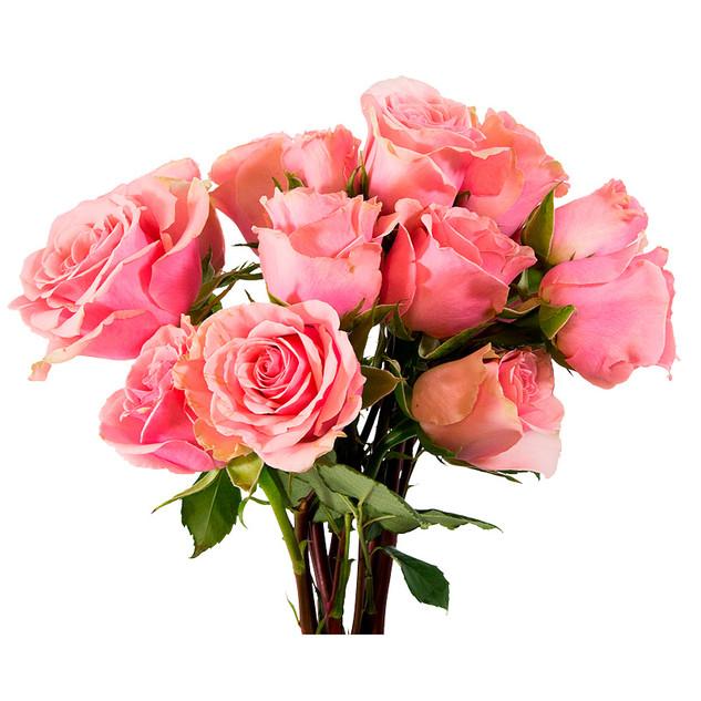 Spray Rose G-bubbly Colossal
