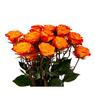 Spray Rose Flame Club Premium