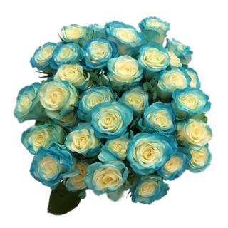 Spray Rose Light Blue
