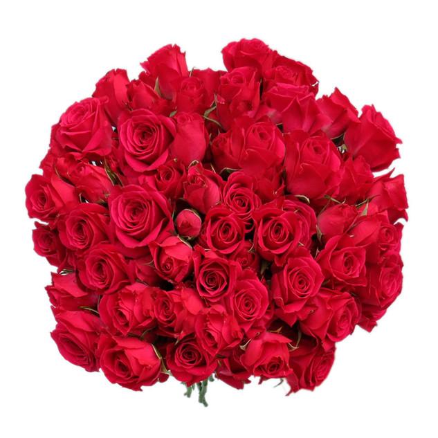 Spray Rose Lovely Lydia